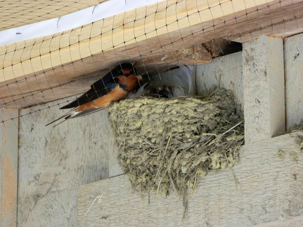 A Fearless Mother Stays With Her Nest Seasons Flow