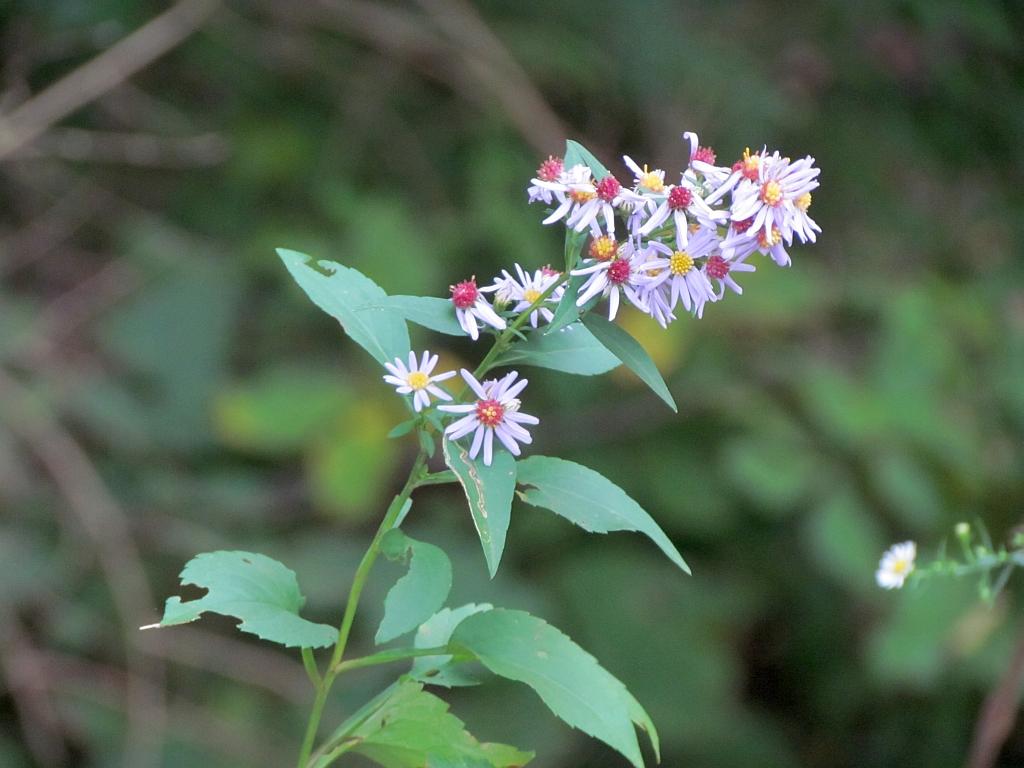 Common Wildflowers Of Ohios Autumn Part 2 Seasons Flow