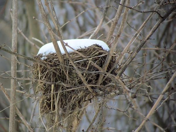 nest 020613 3